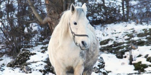 Helden_KV_Blog_Beschaeftigung_Winter
