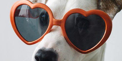 Helden_KV_Blog_Hundeversicherung_12_Gruende
