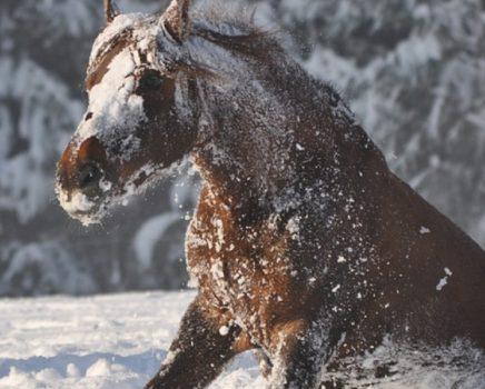 Helden_KV_Blog_Pferdeschnee