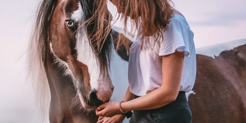 helden_de_KV_Blog_Tag_des_Pferdes_Header
